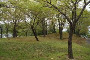 みちのく杜の湖畔公園の林