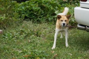 青根洋館の犬