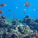大久保浜の小魚