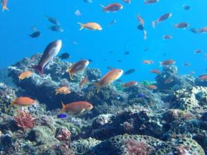 三宅島の小魚