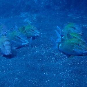 三宅島旅行-釜の尻海岸でダイビング!