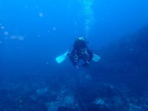 釜の尻海岸でウミガメ探し