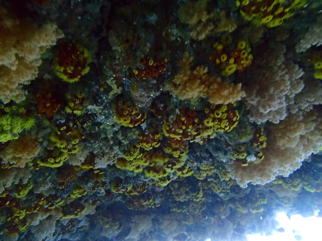 メガネ岩の天井