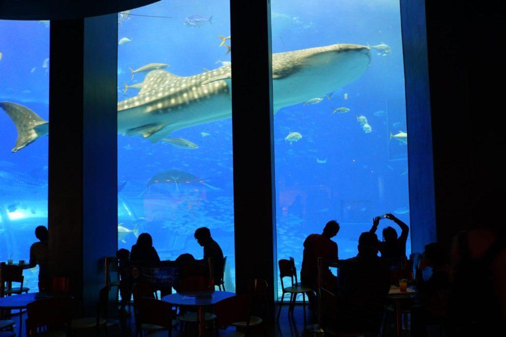 美ら海水族館でジンベイザメを眺めながらコーヒータイム