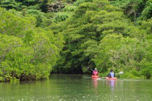 西表島仲間川で楽しむカヌー