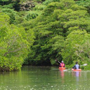 サキシマスオウノキの巨木を目指して西表島の仲間川を遡る