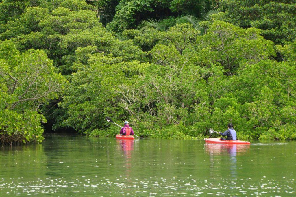 カヌー西表島仲間川を突き進む