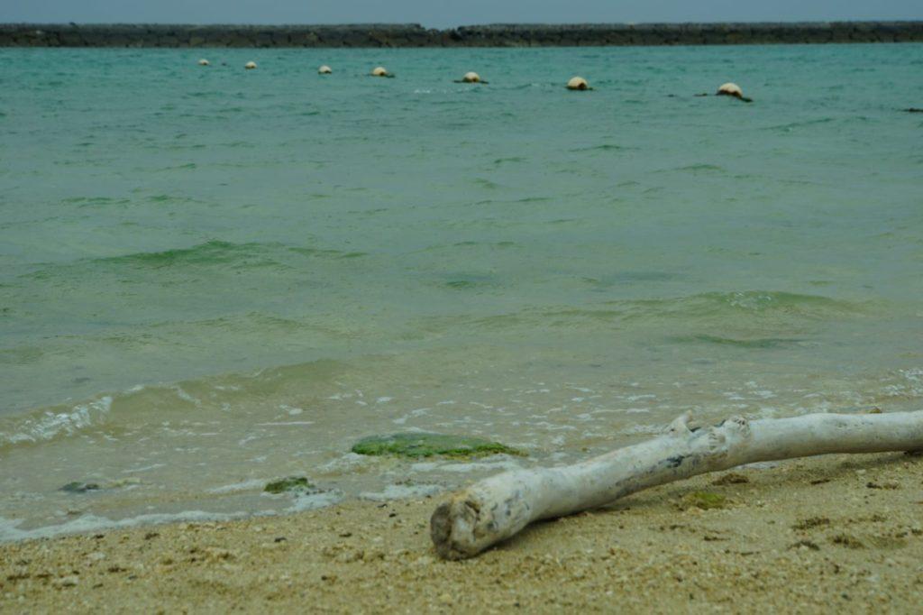 マエサトビーチの枯れ木