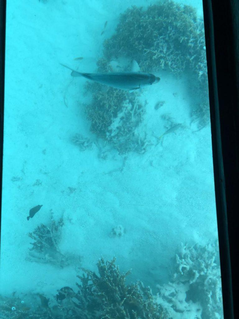 石垣島川平湾のグラスボートから見る魚