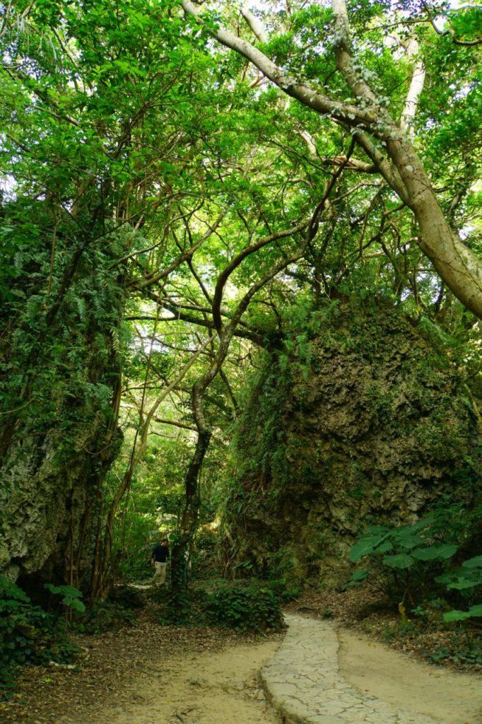 斎場御嶽の緑の空間