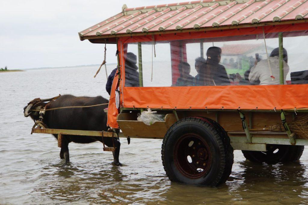 由布島への水牛車で出発