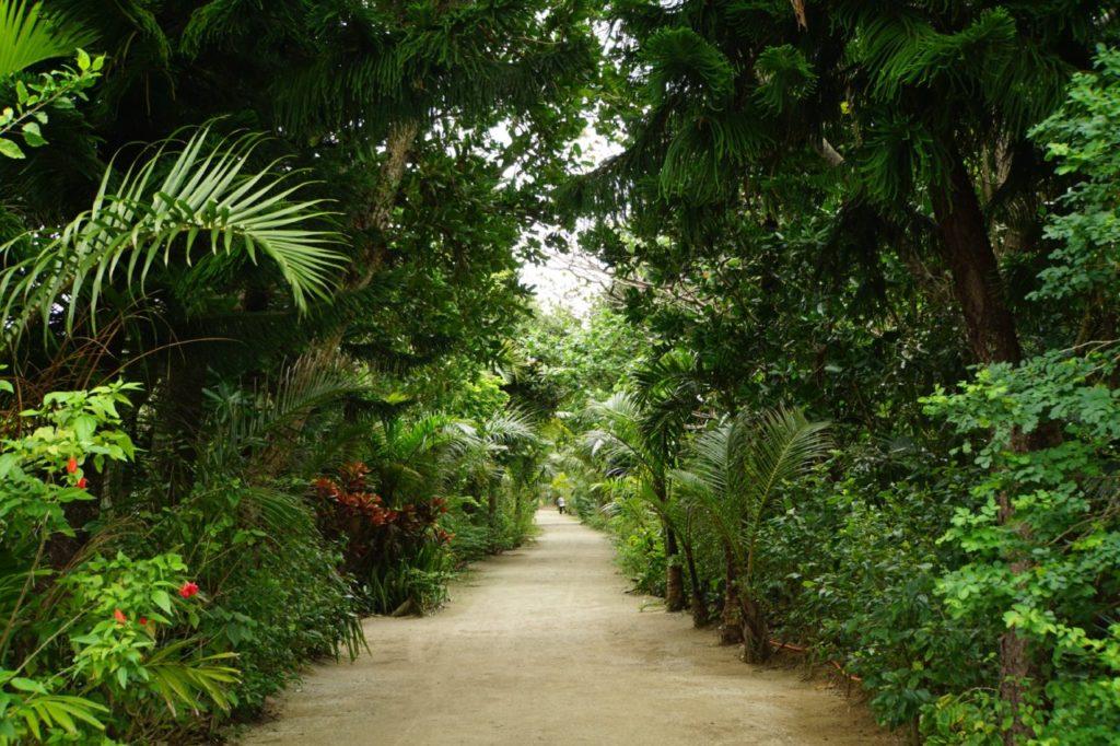由布島内の密林