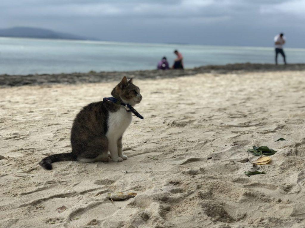 竹富島カイジ浜の猫
