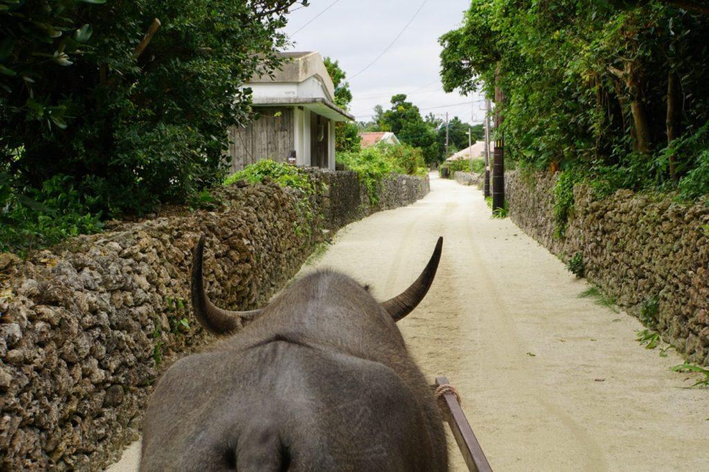 竹富島を水牛で巡る