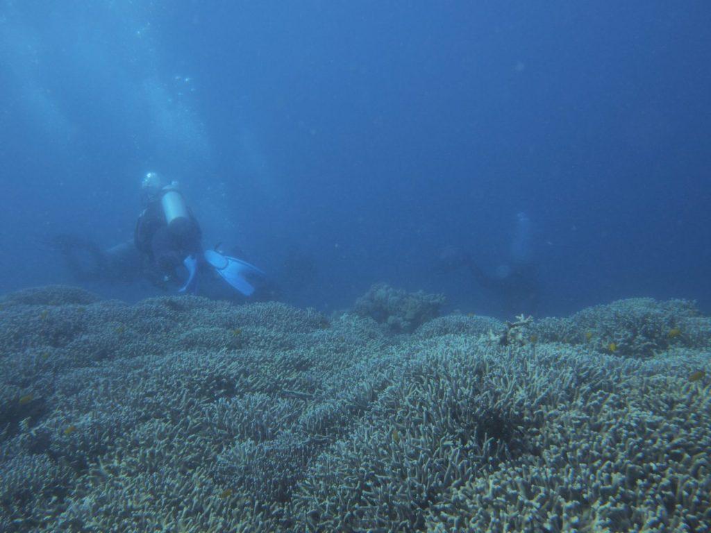 ノバビーチハウスリーフのサンゴ