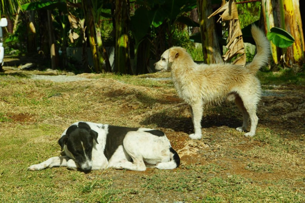 ノバビーチリゾートの犬たち