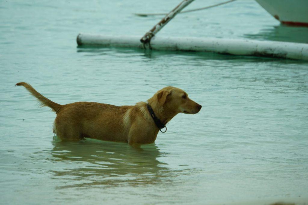 アロナビーチで遊ぶ犬