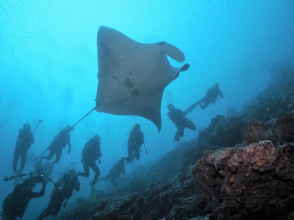 モルディブ・アリ環礁のマーミギリ・アウトリーフでエントリー直後に遭遇したマンタ