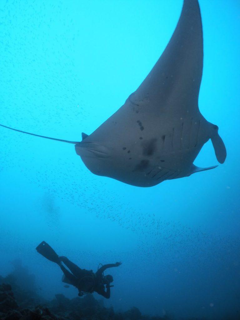 モルディブ・アリ環礁のマーミギリ・アウトリーフでマンタと2ショット