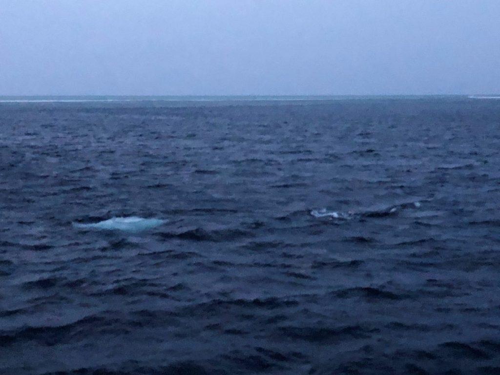 モルディブ・アリ環礁のマーミギリ・アウトリーフで船の上から見たマンタの群れ