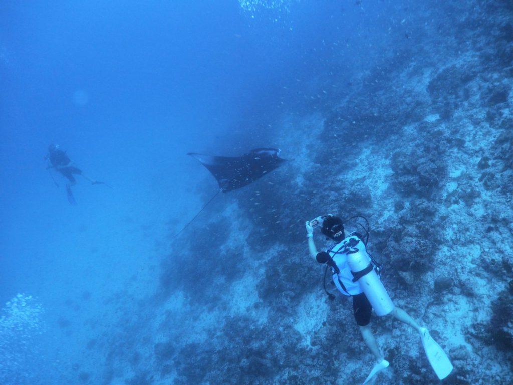 モルディブ・アリ環礁のマーミギリ・アウトリーフで遭遇した2匹目のマンタ