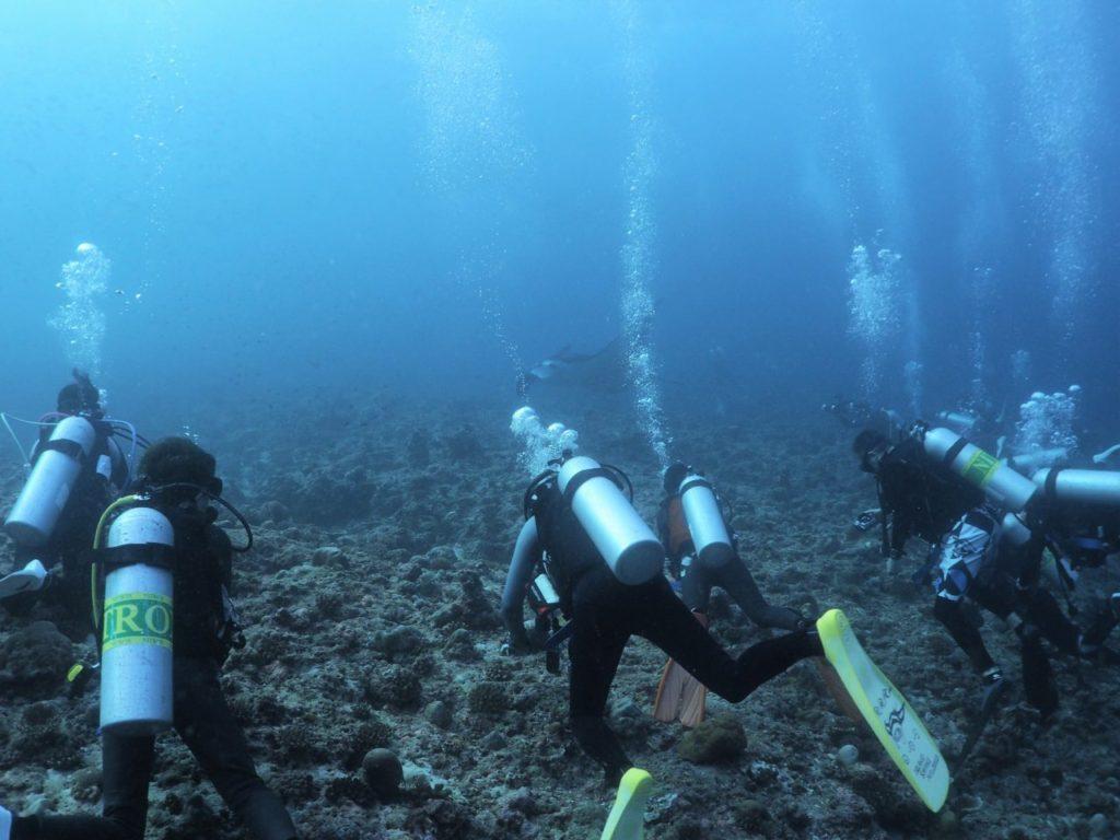 モルディブ・アリ環礁のランガリ・マディバルでマンタを鑑賞するダイバー