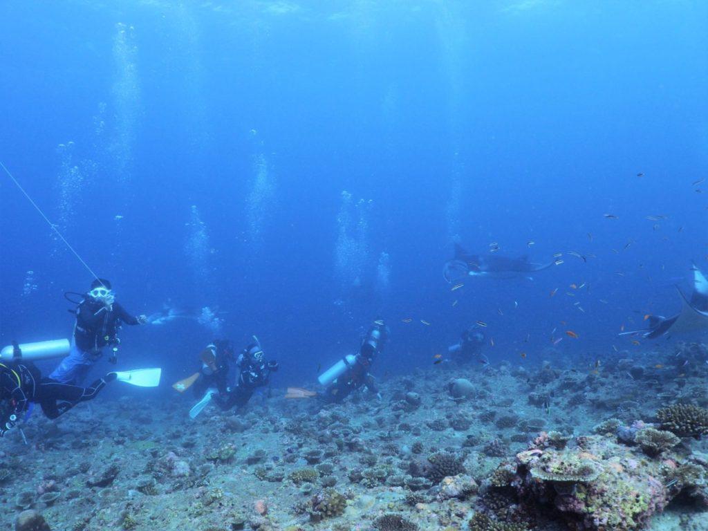 モルディブ・アリ環礁のランガリ・マディバルで安全停止後のマンタ鑑賞