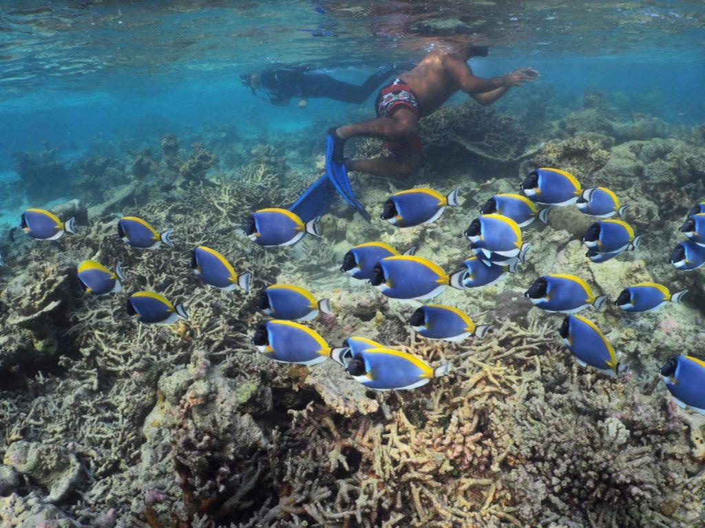 モルディブ・アリ環礁の無人島でシュノーケル