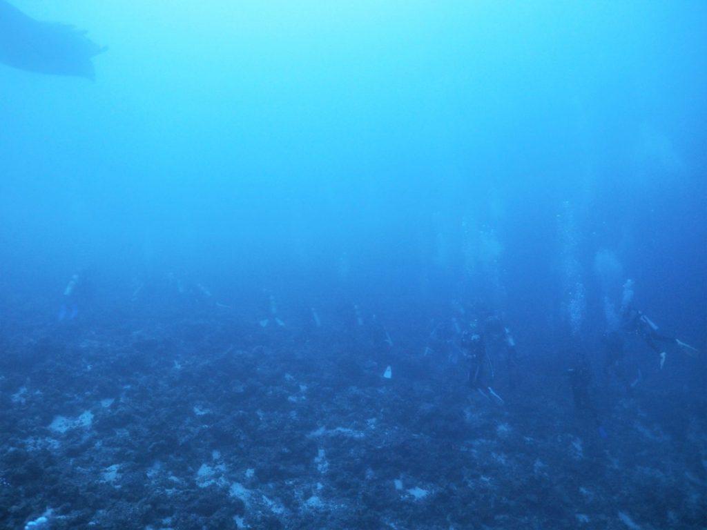 モルディブ・アリ環礁のムーフシ・ロックでマンタ待ちするダイバー