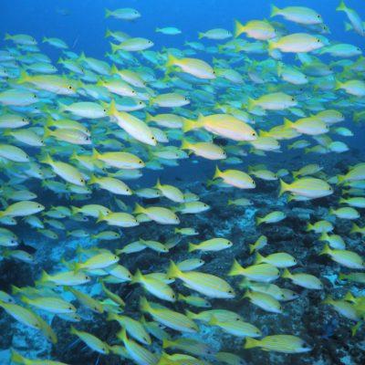 モルディブダイビング5日目-アリ環礁と南マーレ環礁でダイビング!その後はフルマーレでショッピング!