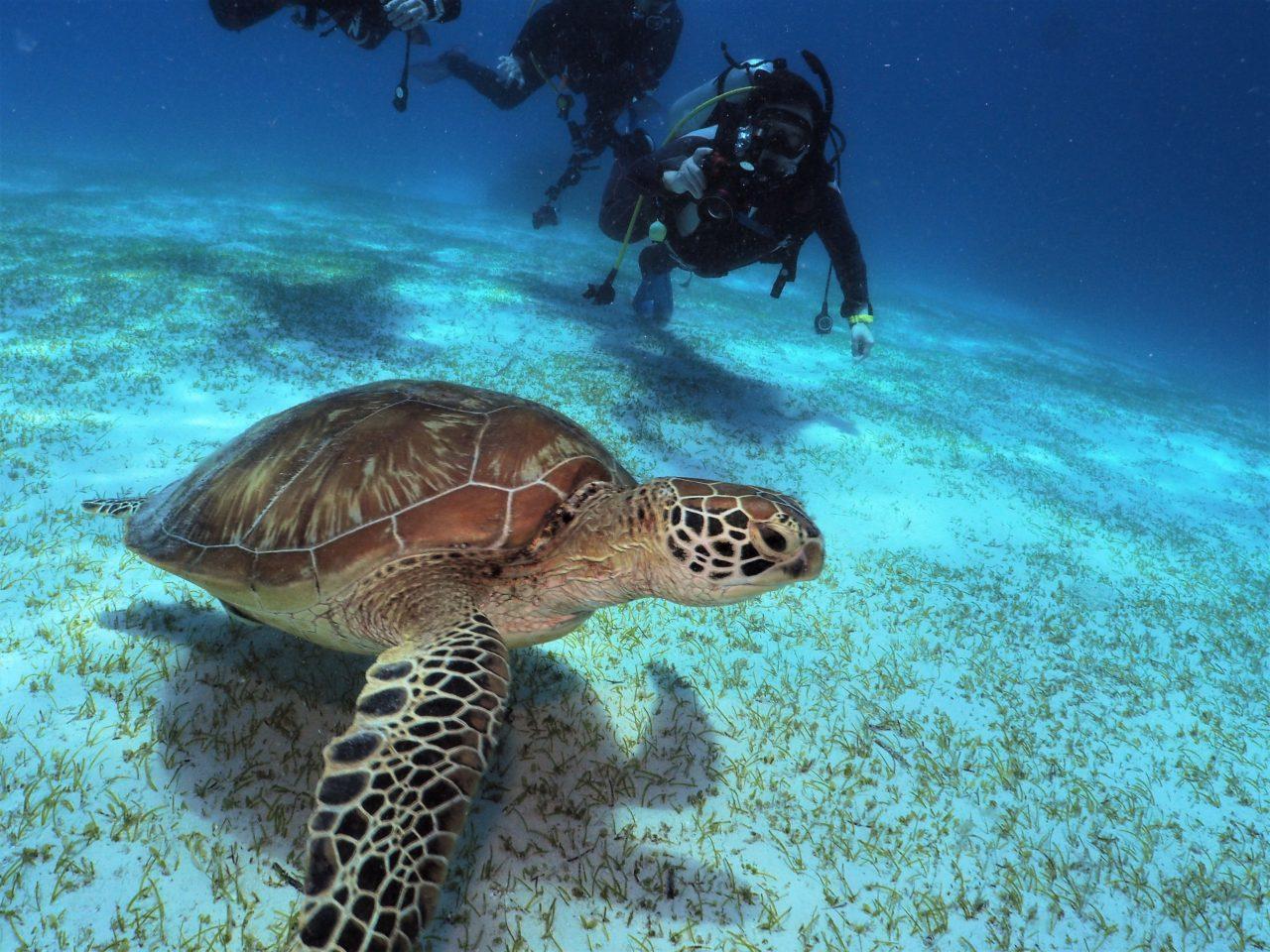 バリカサグ島のダイバーとカメ