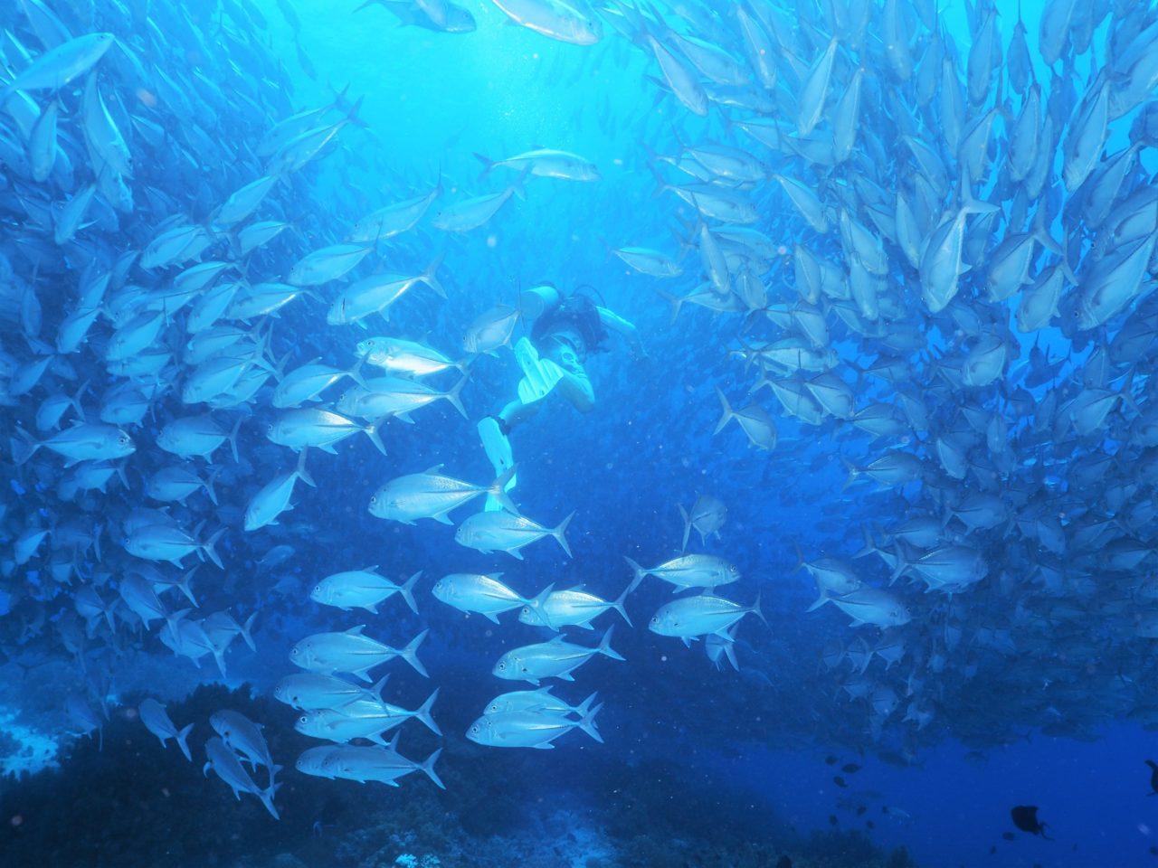 バリカサグ島のギンガメアジの群れに囲まれるダイバー