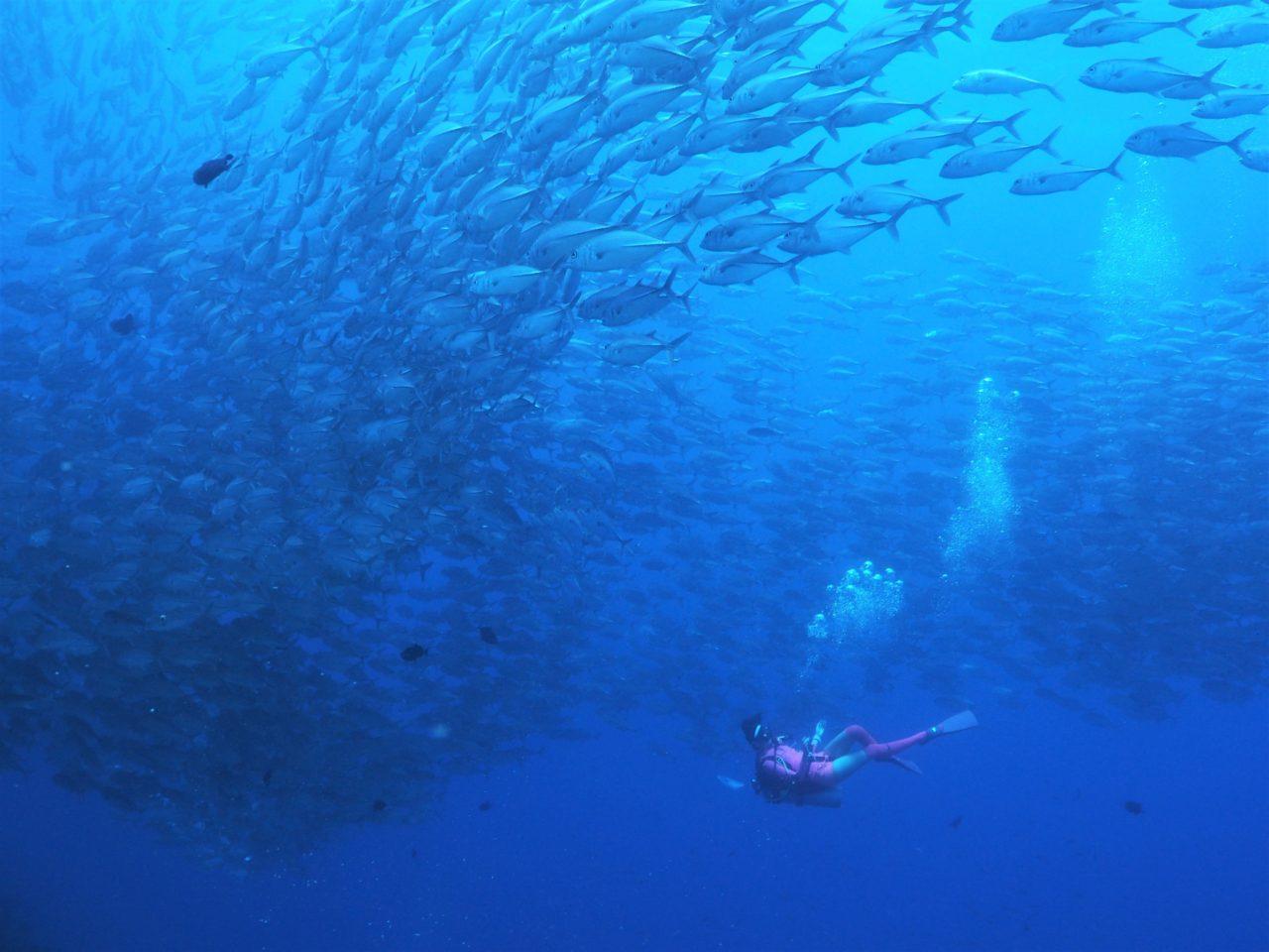 バリカサグ島のギンガメアジリバーに飛び込むダイバー