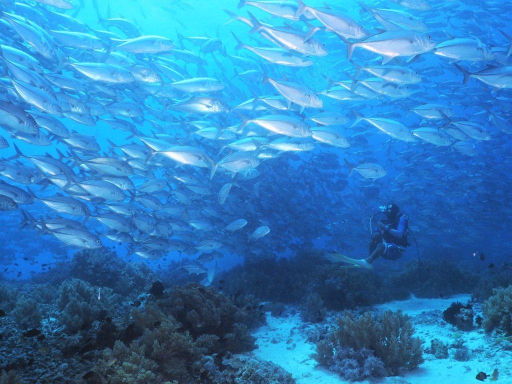 バリカサグ島のギンガメアジの群れを下から眺めるダイバー
