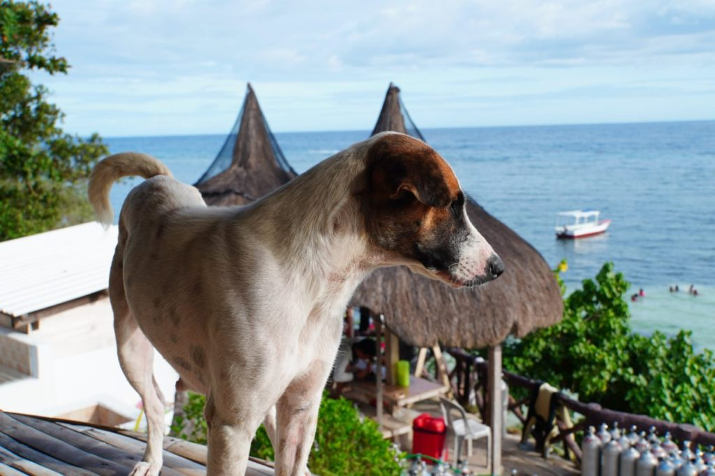 ノバビーチの犬と眺める海
