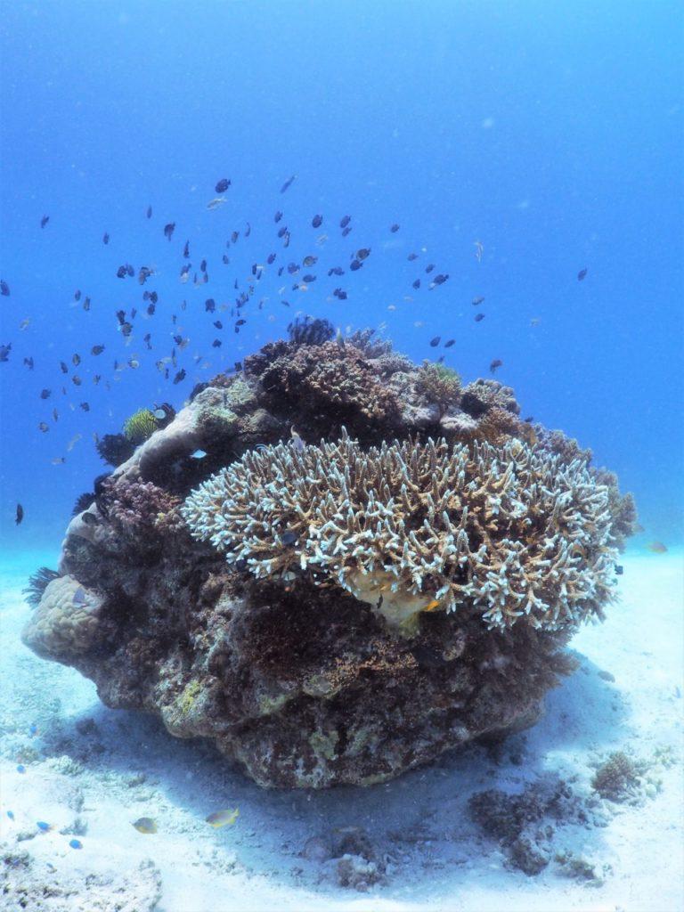 バリカサグ島の砂地とサンゴ