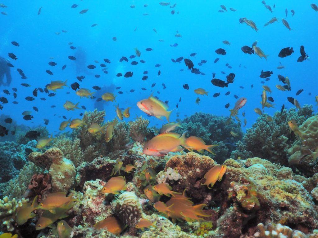 バリカサグ島の熱帯魚