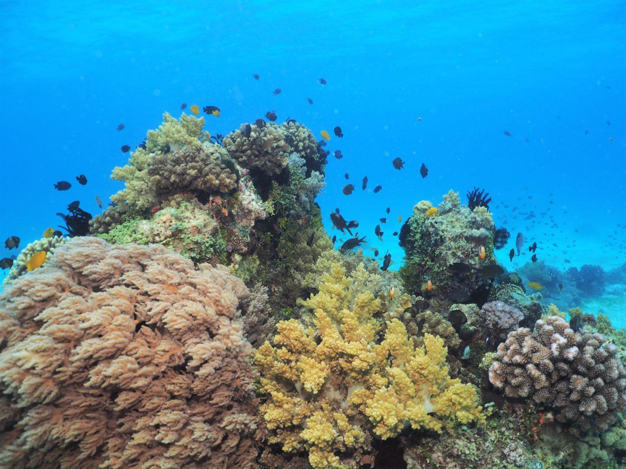 バリカサグ島のソフトコーラルと青い海