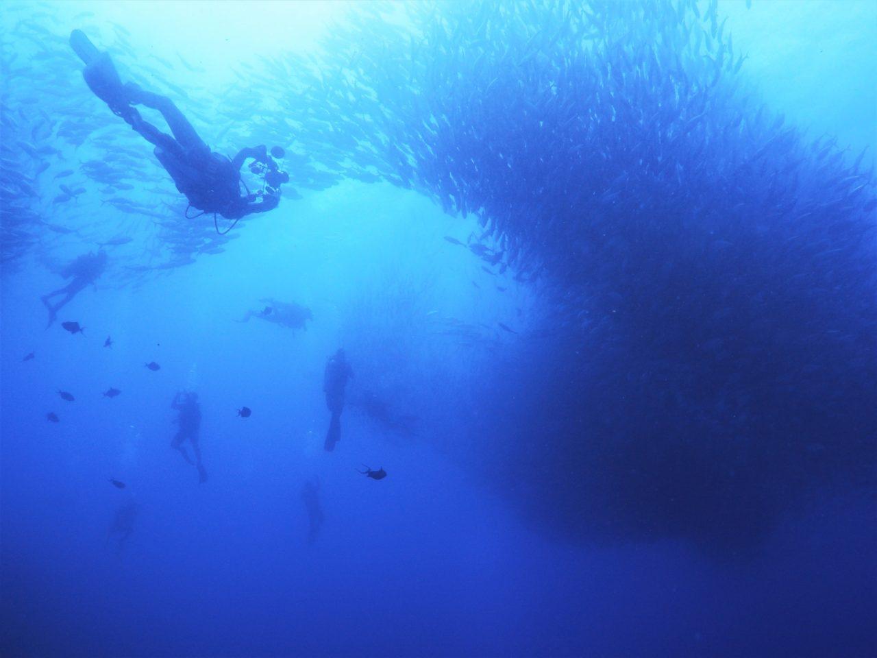 バリカサグ島で一つの巨大な生物のように群れるギンガメアジ